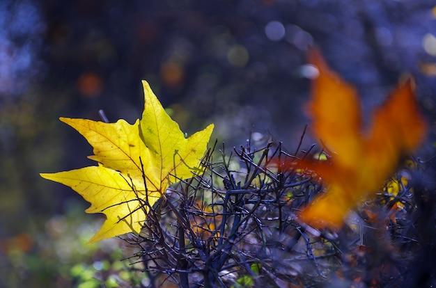 Красивые красочные осенние листья фон