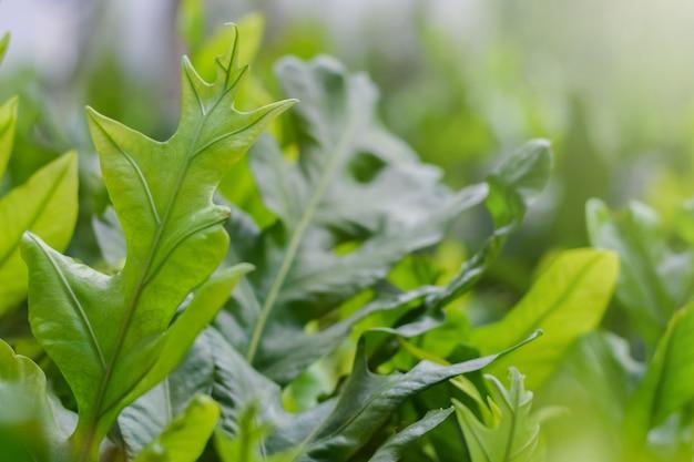 庭の浅い被写し界深度で新鮮な緑のシダの葉を閉じる