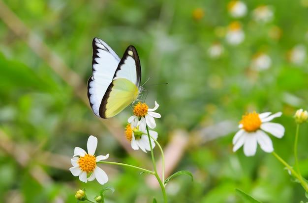 白い花にカラフルな蝶