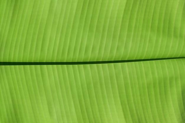 Крупным планом зеленых банановых листьев текстуры абстрактный фон