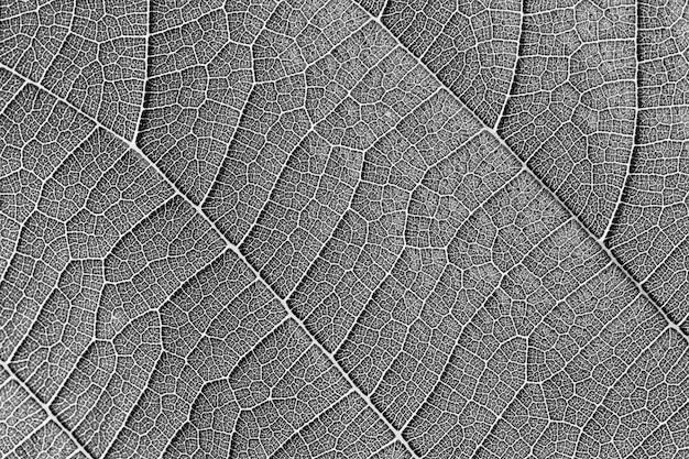 黒と白の葉のテクスチャのクローズアップの背景