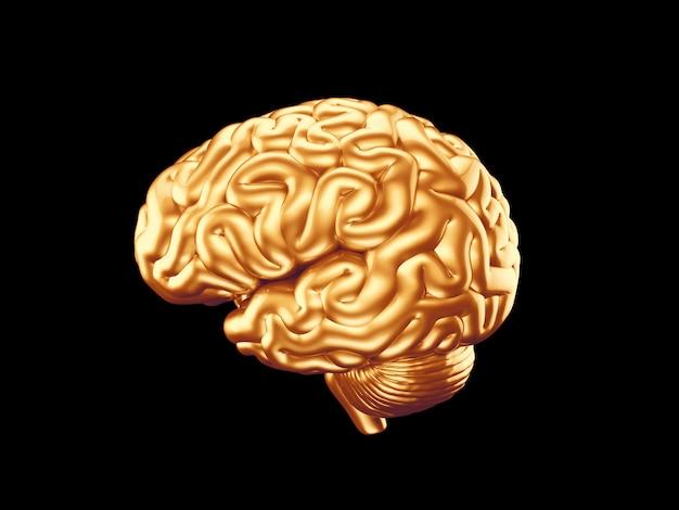 Золотой мозг