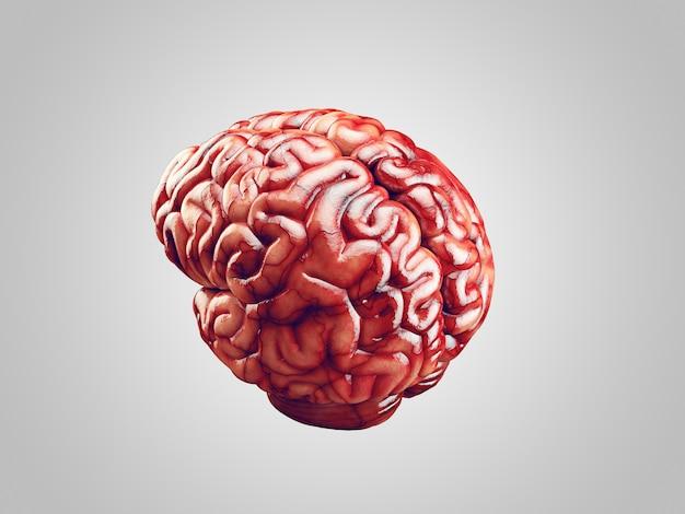 Реалистичная иллюстрация мозга