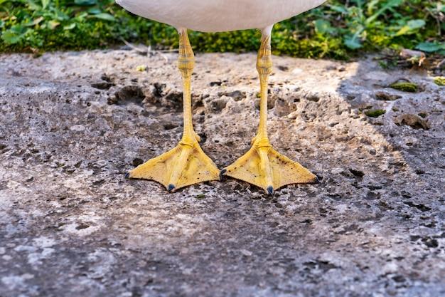 黄色のカモメの足のクローズアップ