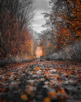 秋の木の写真