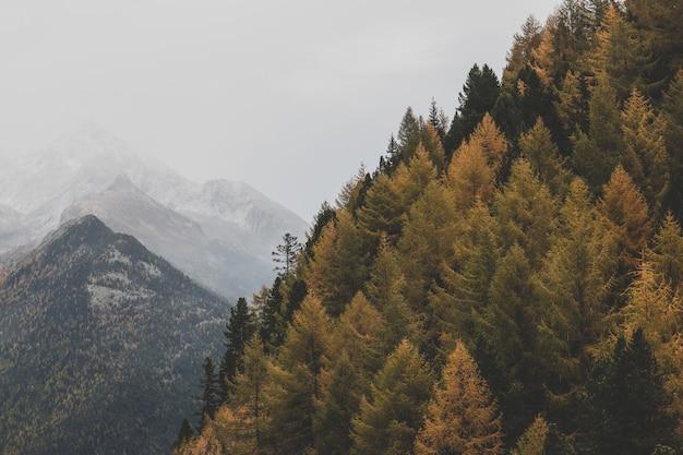 緑の木々の空撮
