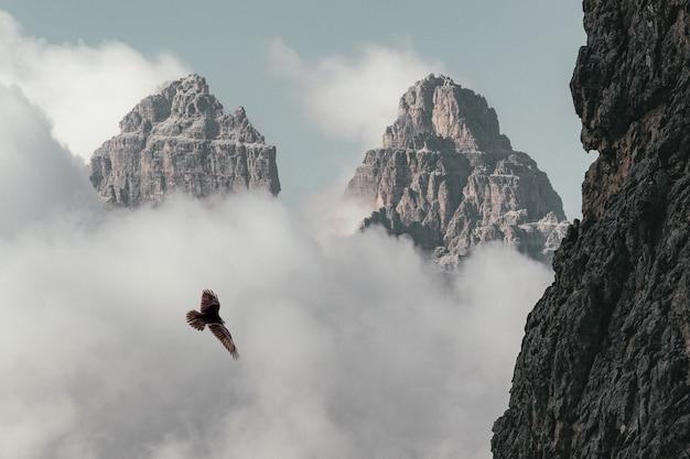 Коричневая птица летит возле горы