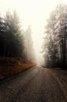 木の近くの灰色のコンクリート道路
