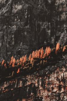 ロッキーヒルのオレンジ色の葉の木