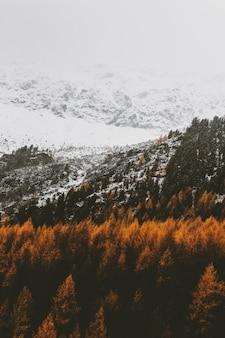 山の上の茶色の木