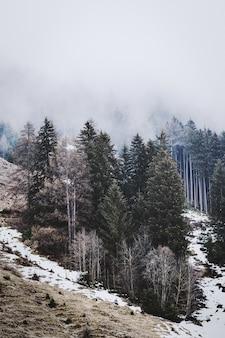 白い空の下の緑の松の木