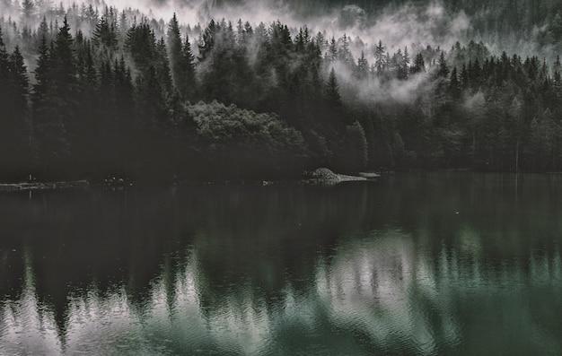 水域近くの松の木