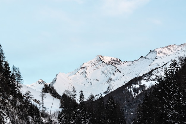 昼間に青空の下で黒い木が雪に覆われた山