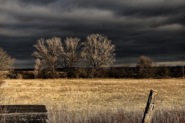 夜間の黒い空の下の茶色の芝生フィールド