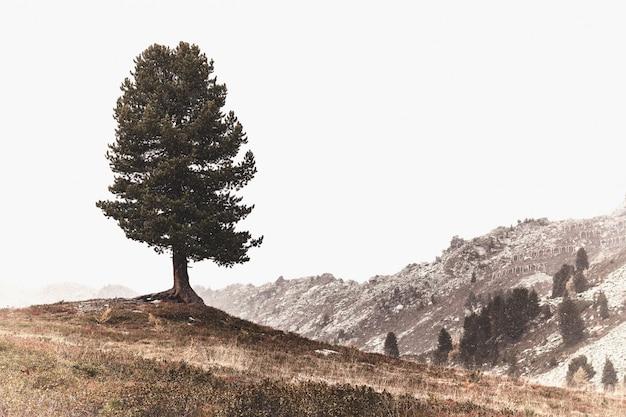 山の風光明媚なビュー