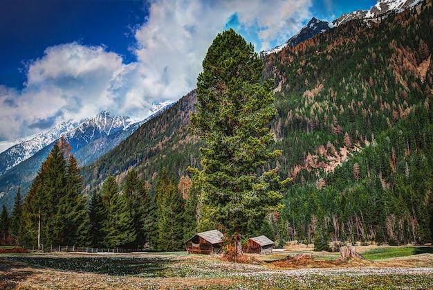 Елки в горах