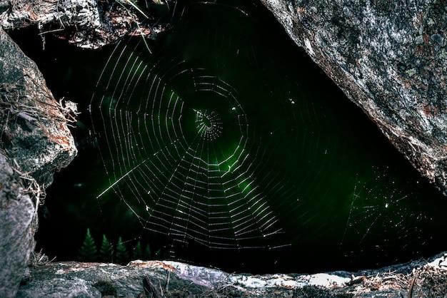 クモの巣のマクロ写真