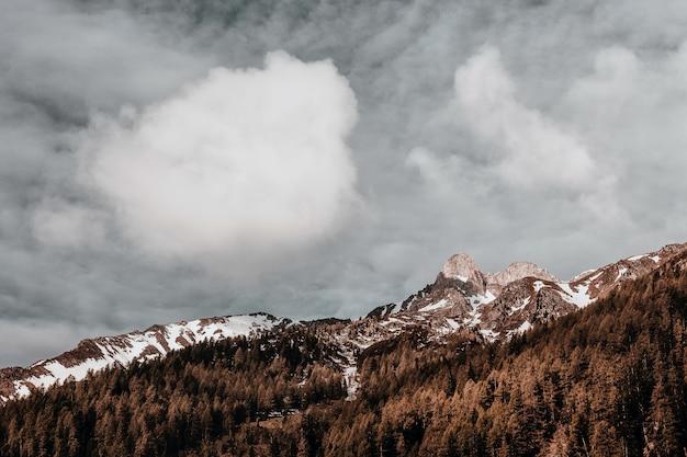 茶色の木と灰色の空