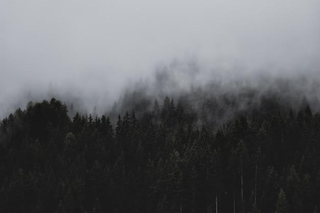 雲の下の森
