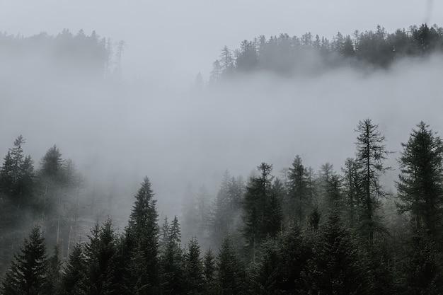 森の霧に囲まれた木々