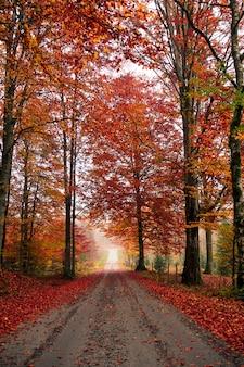 Кленовые деревья в лесу