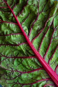 Зеленый овощной лист