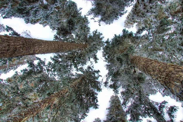 Зеленые деревья вид