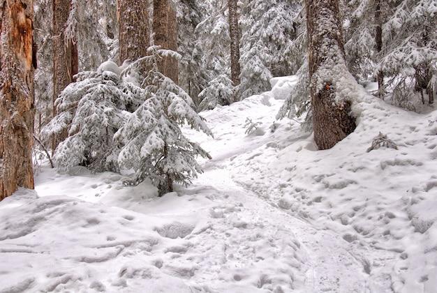 Деревья покрыты снегом