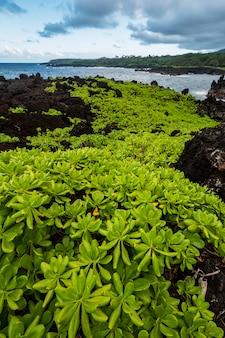 水域近くの茶色の岩の上の緑の植物