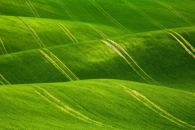 Красивое зеленое поле в южной моравии, чешская республика
