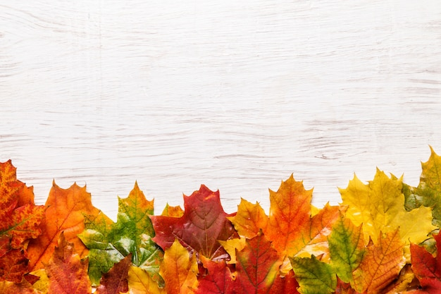 秋の葉の背景の画像