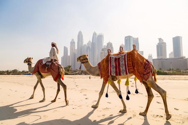 Изображение с верблюдами.