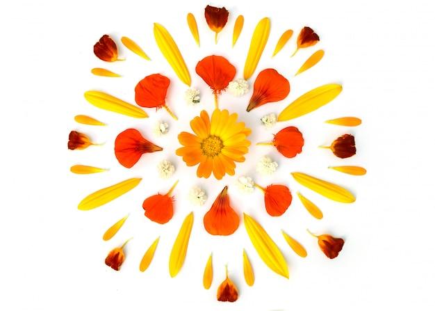 花びらのある画像。