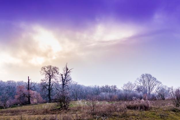 朝日が昇る中、霜で覆われた木々のある風景。冬の森の上の美しい空