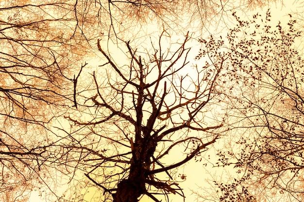 日の出の昇天時の木のシルエットと空の背景