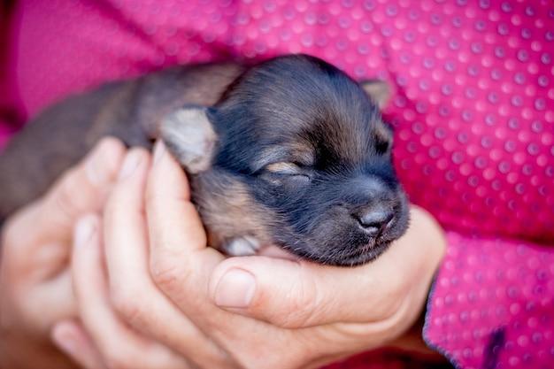 女性は彼女の手で生まれたばかりの子犬を保持します