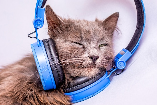 Кошка в наушниках. слушаю музыку для отдыха. удовольствие от прослушивания музыки