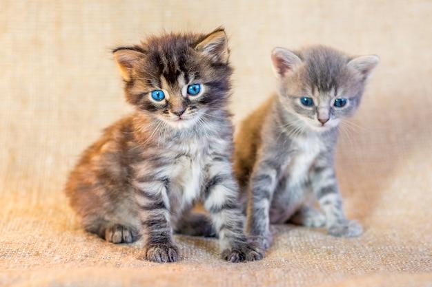 Два маленьких привлекательных котенка с доверчивым взглядом