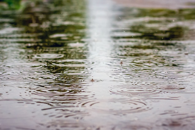 Дорога с лужами воды во время дождя и отображения деревьев. капли дождя струятся в луже