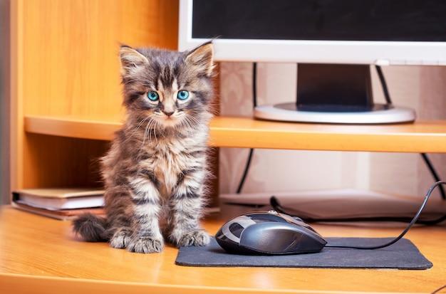 Маленький полосатый мохнатый котенок с голубыми глазами сидит возле компьютера. котенок возле компьютерной мыши