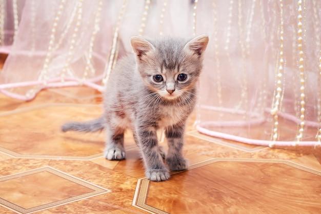 Маленький серый котенок гуляет по комнате