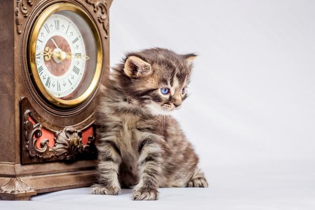 古代の時計の近くに小さな子猫が座っています。時間を追跡します。内部の古い希少性
