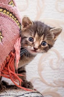 小さな縞模様の子猫が隠れ家から見えます。子猫が遊んでいて楽しい
