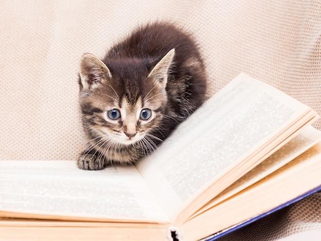 Котенок играет вокруг открытой книги. ребенок учится читать