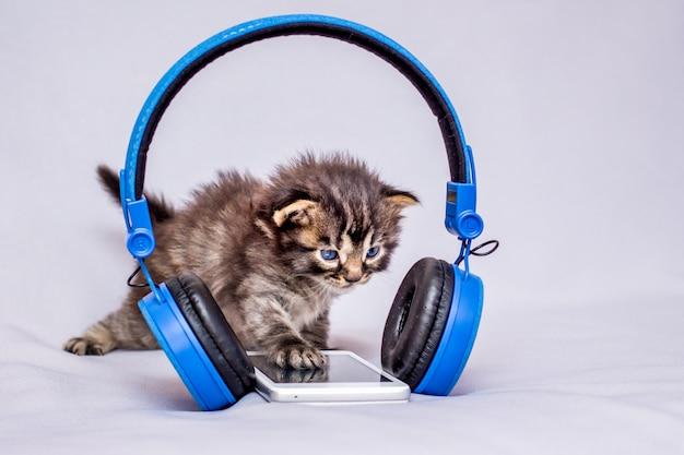 Котенок возле мобильного телефона и наушников. слушать музыку. поиск информации в интернете с помощью мобильного телефона