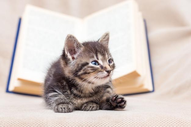 Маленький котенок лежит возле открытой книги. отдых во время тренировки