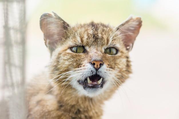 明るい背景に古いイライラ猫の肖像画