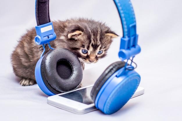 Котенок выглядит любопытно на мобильный телефон и наушники. слушайте современную популярную музыку