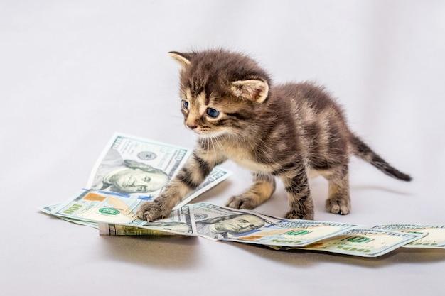 Маленький котенок возле долларов. подсчет прибыли, прибыли от бизнеса