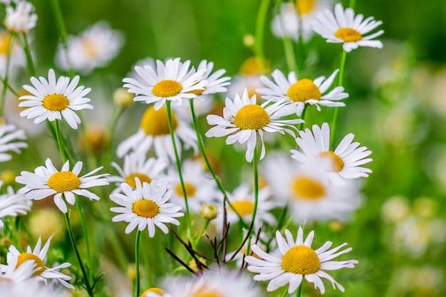 明るい夏の日の明るい緑の背景に白い鎮静